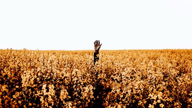 Lost in a field of flowers